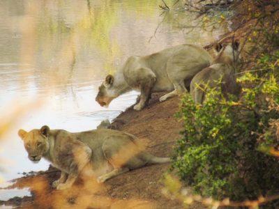 Na África do Sul, mergulhe numa aventura totalmente selvagem!